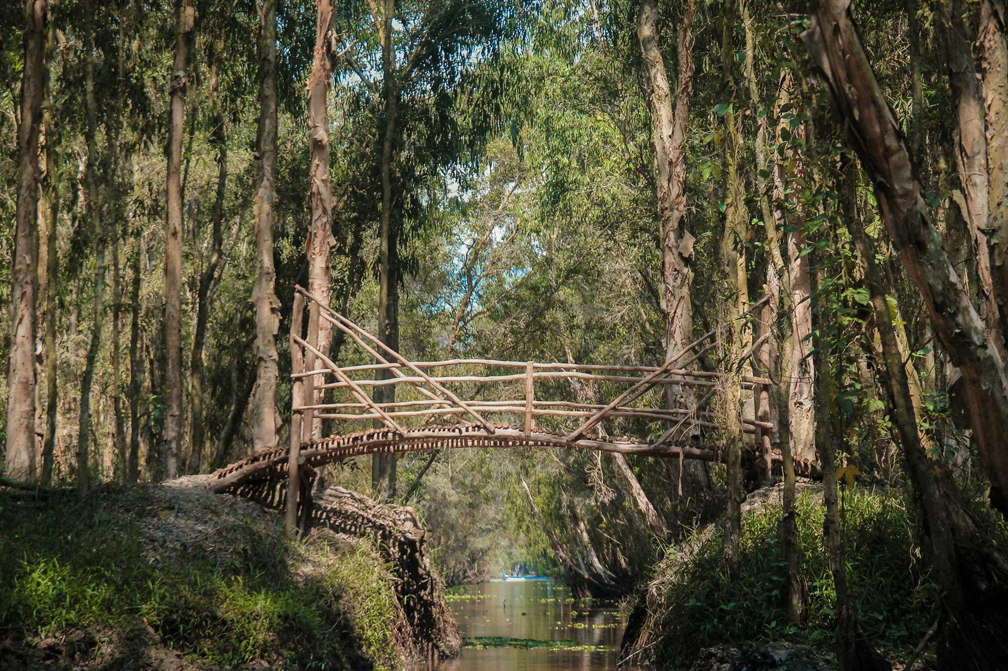 Cây cầu bắc qua rừng đước trong khu du lịch cà mau này (Nguồn sưu tầm)