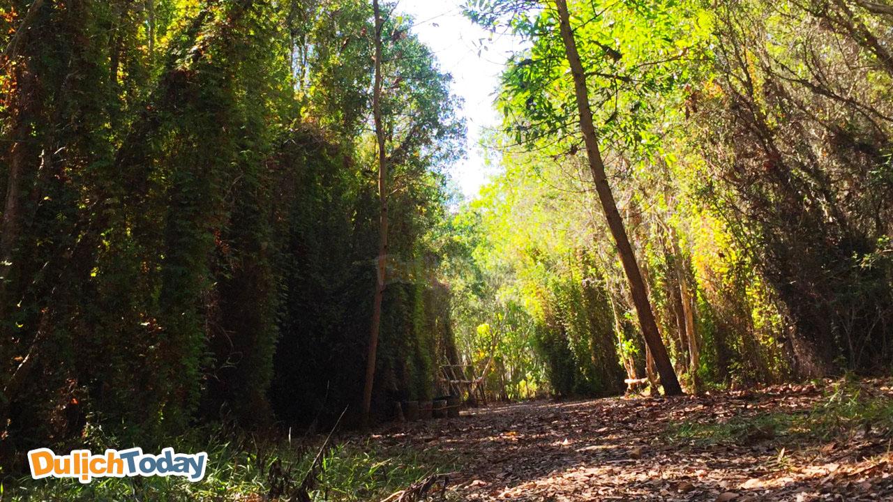 Một góc chụp khác tại rừng quốc gia Bình Châu