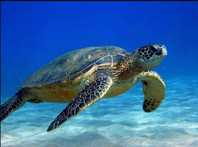 Tới thăm Côn Đảo - nơi bảo vệ nhiều rùa biển nhất Việt Nam - ThienNhien.Net  | Con người và Thiên nhiên